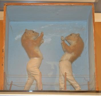 Boxing Squirrels at the Tunbridge Wells Museum Image Rachael Hale