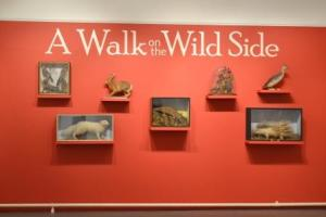 Walk on the Wild Side Exhibition at Tunbridge Wells Museum Image Rachael Hale