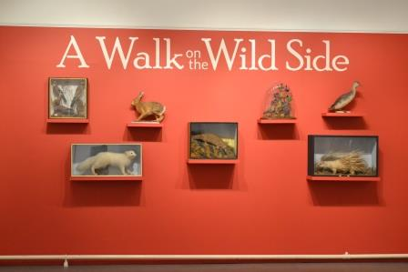 Walk on the Wild Side Exhibition at Tunbridge Wells Museum Image Rachael Hale